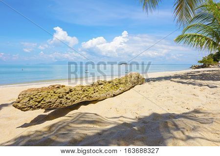 Palm tree casting shadows at beach in Penang, Malaysia Asia. Piece of wood trunk lying in the sand.
