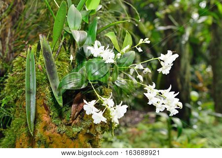 White Orchid Growing On A Tree