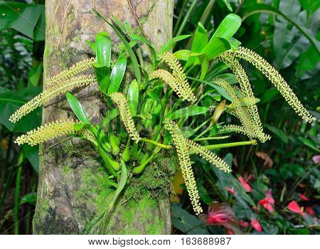 Tropical Flower Growing On A Tree