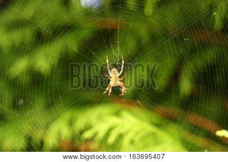 Spiderweb on green natural blurry background with a spider in action