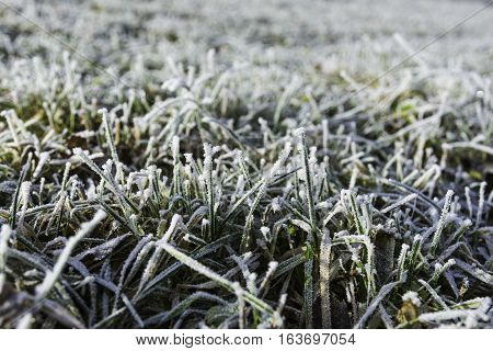 Frosted grass in a meadow in the woods