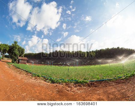 Wide vision lens angle fish eye vegetable farm vibrance with blue sky