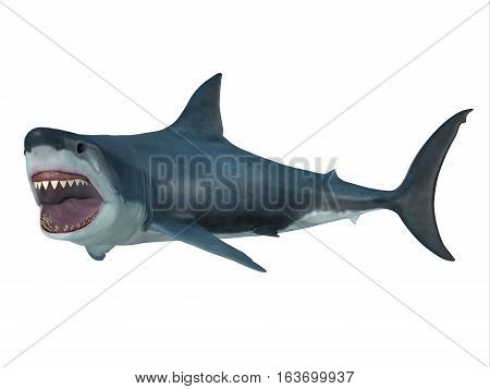 Great White Shark Left Turn 3D illustration - The Great White Shark is the largest predatory shark in the ocean and can grow to 26 feet and can live for 70 years.