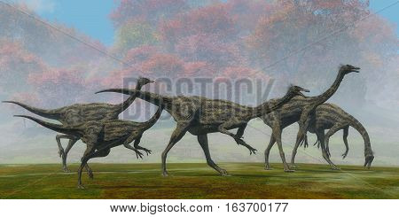 Gallimimus Dinosaur Fall Day 3D illustration - A flock of Gallimimus dinosaur reptiles forage for food in the Cretaceous Period of Mongolia.