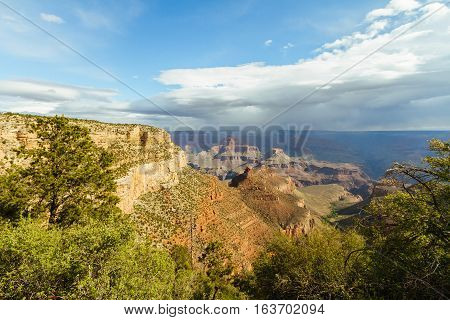 A view of the Grand Canyon through a pocket of trees lining the rim