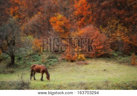Autumn in Carpathian mountain range Ukraine. Horse.