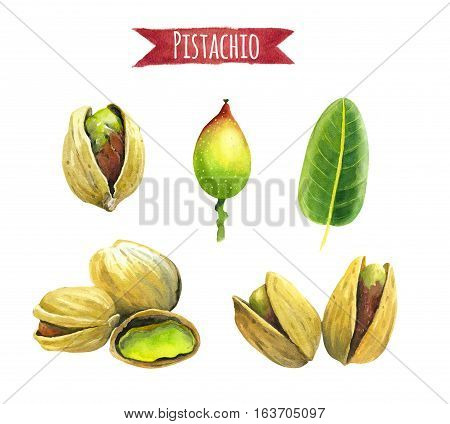 Pistachios isolated on white, hand-painted watercolour illustration