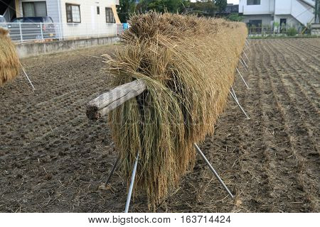 a haystack in a rural Matsumoto yard in Japan