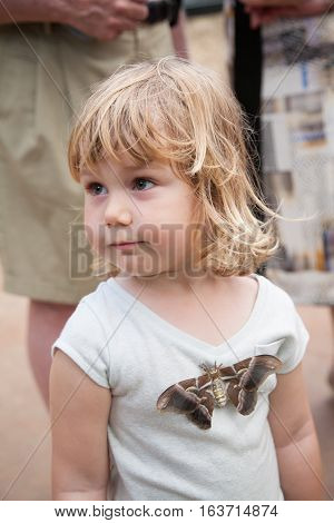 portrait of three years old blonde pretty child looking with beautiful tropical moth butterfly named Samia Ricini or Cynthia from Saturniidae family on her shirt