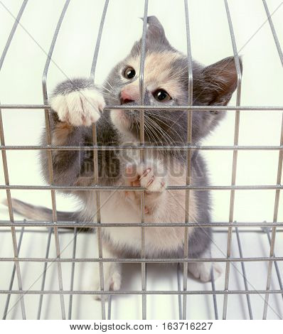 Kitten in a cage on white background. Cat trying to get out of the cage