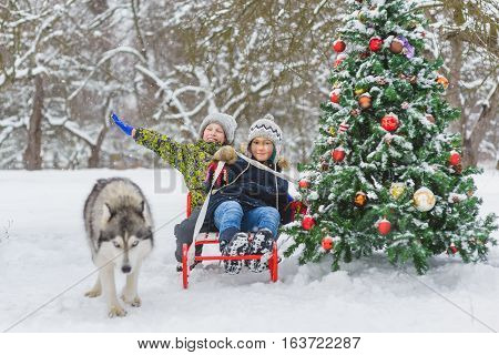Happy boys sledding near christmas tree and dog in winter day outdoor.