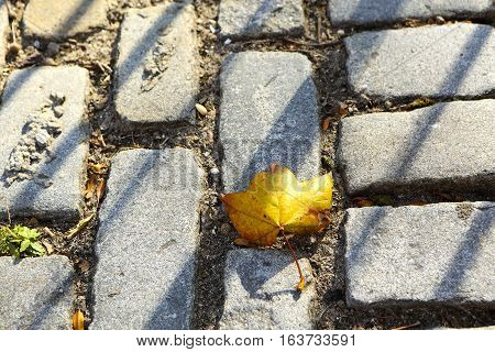 Yellow leaf in New York City with cobble stone bricks
