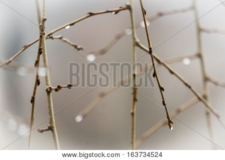 Water droplets on branches on a cool, misty afternoon