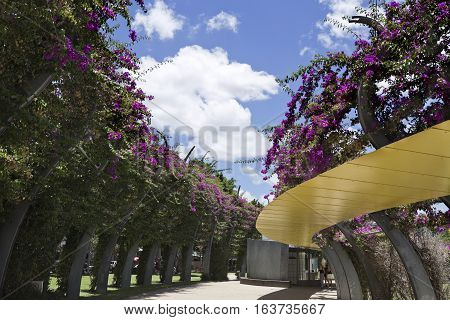 BRISBANE, AUSTRALIA - December 28, 2016: The Arbour consists of 443 curling steel columns covered in bouganvilleas which flower throughout the year.