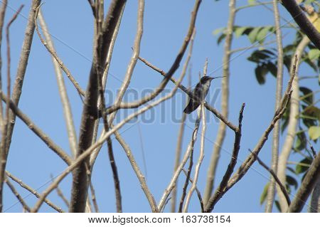 Hummingbird with many colors in a tree branch and sky