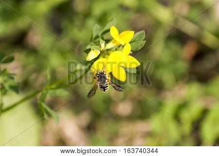 A bee resting on a yellow flower