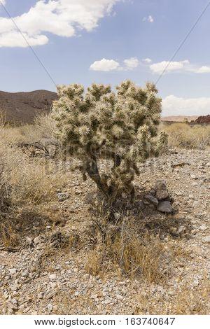 A small prickly bush in the Nevada desert