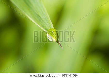 drop end the green leaves blur background macro lens