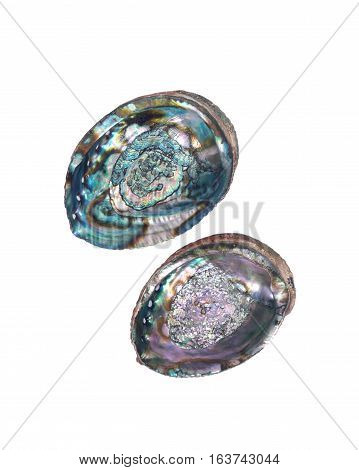Bright polished rainbow abalone shell isolated on white background