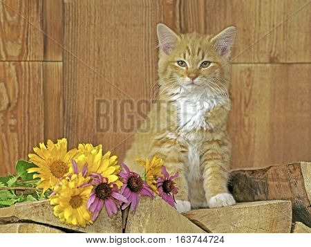 Kitten ginger tabby sitting on logpile beside flowers