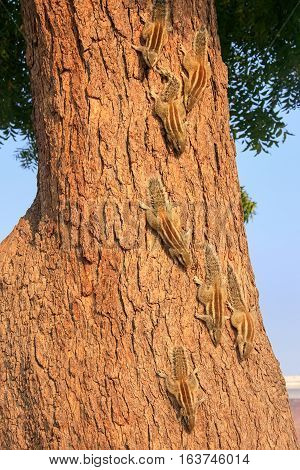 Indian palm squirrels on a tree in Agra Fort Uttar Pradesh India. This fort is a very popular tourist site in Agra
