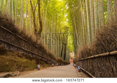 Bamboo Forest at arashiyama Kyoto Japan. green bamboo fence background texture
