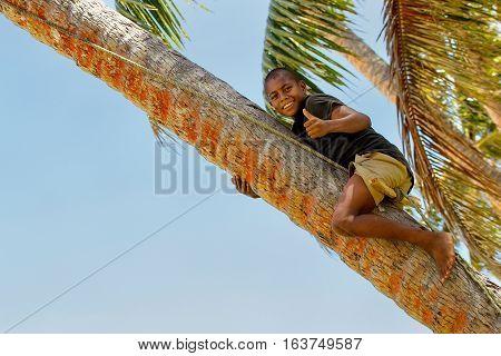 Lavena, Fiji - November 27: Unidentified Boy Climbs Palm Tree To Swing On A Rope Swing On November 2