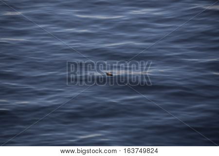 A fishing bobber floating in a lake