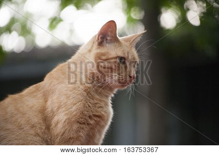 Golden tabby cat looking down from an outdoor perch
