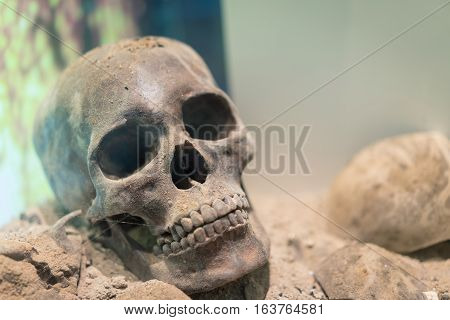 Ancient human skull lay on the ground in soft light.