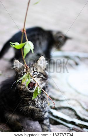 kitten with open mouth,kitten playing with a plant, feline fun, kitten with leaves, kitten playing in the street, surprised cat