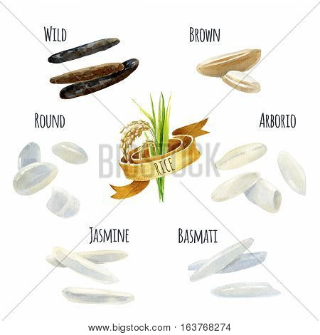 Rice types hand-painted watercolor illustration set with clipping paths