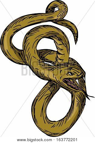 Drawing sketch style illustration of a viper snake coiling up coiled with mouth open and tongue out ready to pounce set on isolated white background.