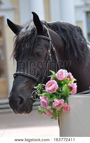Portrait of a horse with flowers roses on a summer day in the park