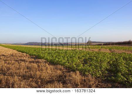 Shooting Landscape