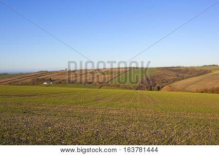 Winter Agricultural Landscape