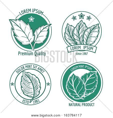 Vector mint leaf logo icons or menthol spearmint labels. Healthy fresh herb, peppermint organic badge illustration