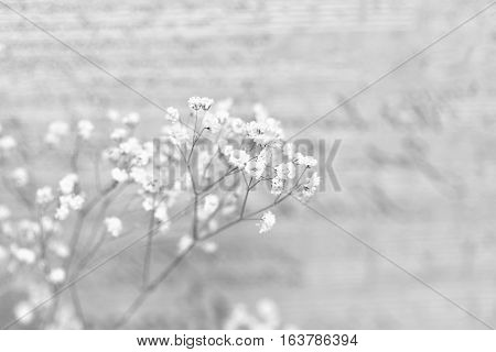 Small white flowers on an abstract background. Sprig of flowers gypsophila