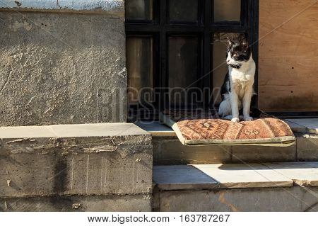 Black and white stray lean cat looking at street