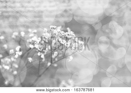 Small white flowers on an abstract background. Valentine's Day. Sprig of flowers gypsophila