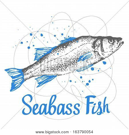 Hand drawn vector illustration with sketch seabass. Fish Market. Seafood menu. Brush calligraphy elements for your menu design. Handwritten ink lettering.