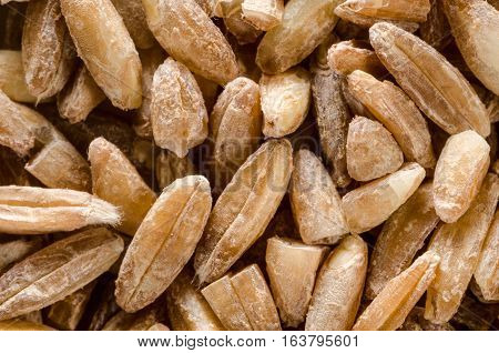 Uncooked raw spelt wheat. Food background. Healthy lifestyle concept. Closeup macro shot.