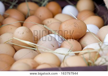 Closeup image of a basket full of egg with one brown egg above the rest.