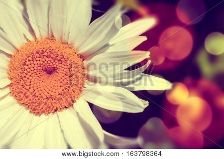 Daisy abstract background.Light flare and color effect.Flower background
