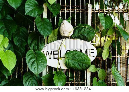 Foliage Leaf And Wire Cage With Welcome Text Banner