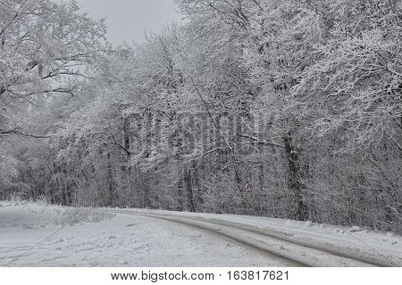 The road through the winter woods. Everything is covered with snow. Left turn