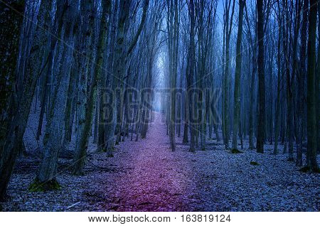 Creepy autumn forest in night. Forest background