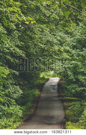 Forest trees. nature green wood sunlight backgrounds. Path in forest.