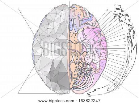 cerebral hemisphere. abstract brain with multicolor line and light