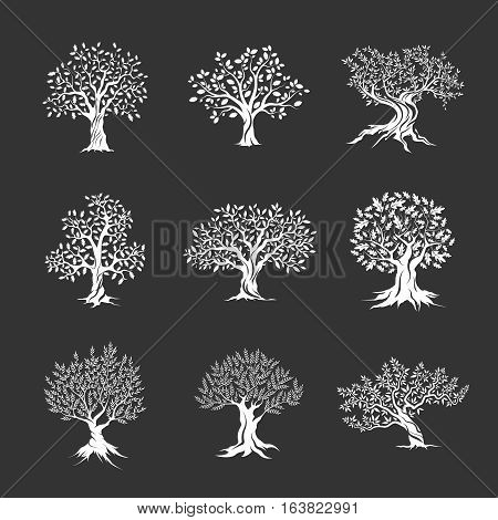 Beautiful magnificent olive and oak trees silhouette isolated on dark background. Web infographic modern vector tree sign. Premium quality illustration logo design concept pictogram set. Ukraine